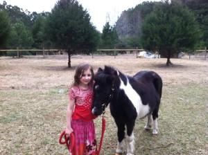 C loves horses.