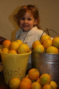 Lemons from tree 09 003