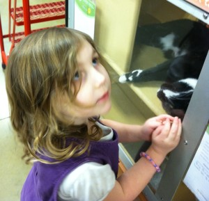 Playing with the cat at the pet store.