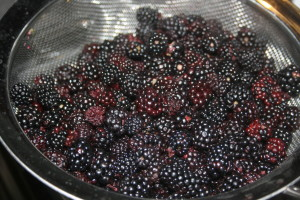 A few of the dewberries we picked.